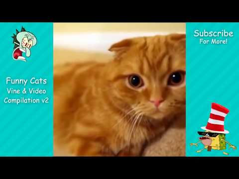 Funny Cats Vine & Video Compilation v2