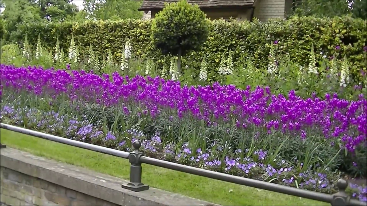 Beautiful flowers in hyde park london spring day youtube beautiful flowers in hyde park london spring day mightylinksfo