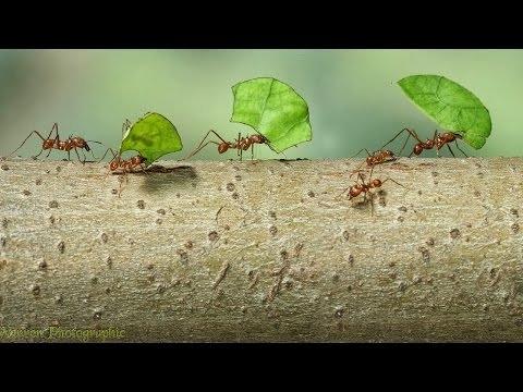 Ants: Nature's Secret Power 2 - BBC Documentary