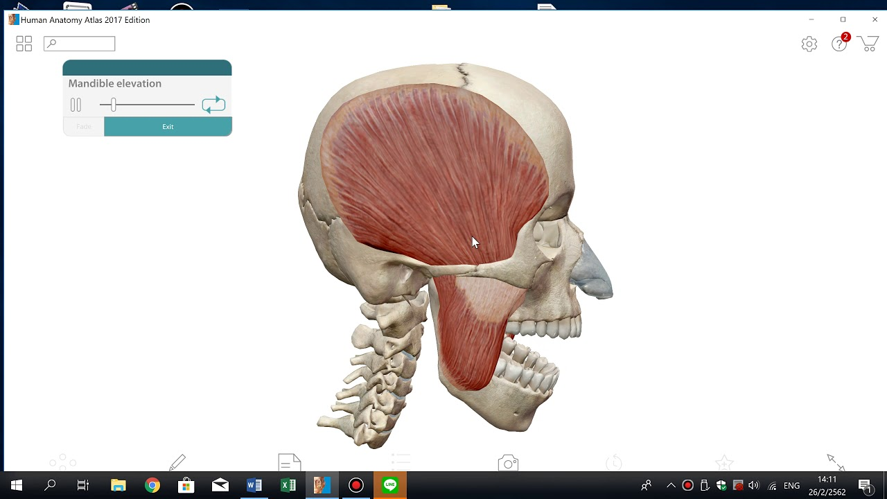 mandible elevation/temporalis muscle action - YouTube
