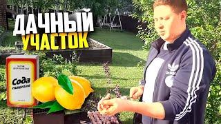 Нежный шашлык в маринаде из соды и лимона