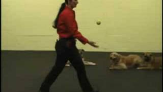Fortunate K9 Dog And Owner Training - Figure Eight