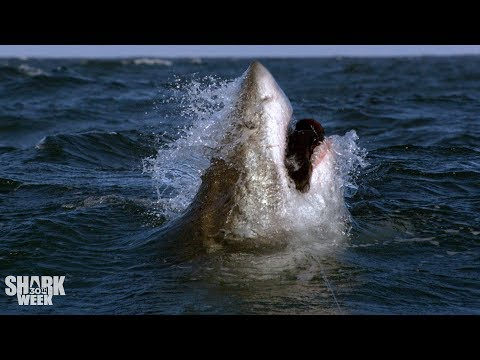 Changing the Image of Sharks | 30 Years of Shark Week