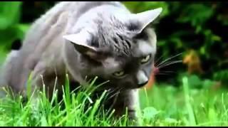 Techno koty#3