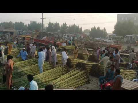 DG Khan Fruit Mandi
