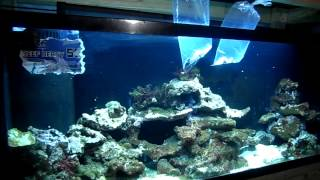 New Fish New Clean Up Crews New Aquarium Plans Led Lights On 125 Gallon  Reef Doing Good