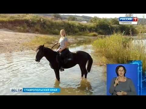 фото конях на