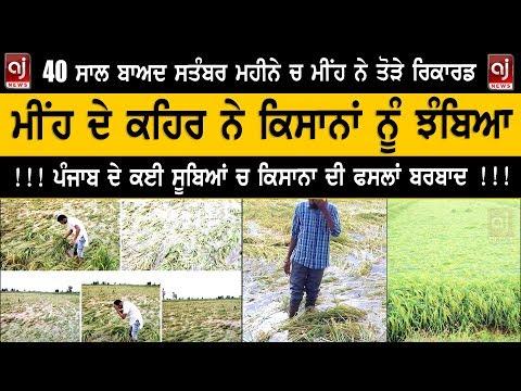 ਪੰਜਾਬ ਚ ਮੀਂਹ ਦੇ ਕਹਿਰ ਨੇ ਕਿਸਾਨਾਂ ਨੂੰ ਝੰਬਿਆ | Punjab Kisaan | Punjab Weather News