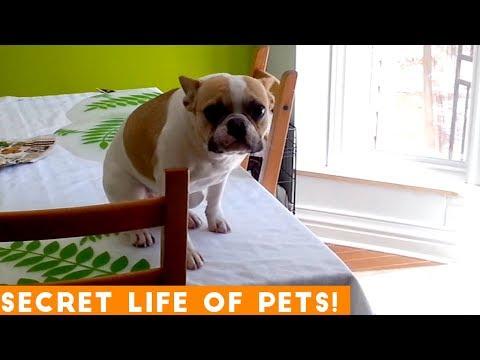 Secret Life of Pets Funniest Compilation 2019 | Funny Pet Videos