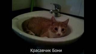 Домашние котята. Смешные животные.