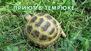 Приют для среднеазиатских черепах в Темрюке