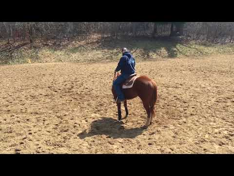 One Rein Stop Circle 4 Horsemanship