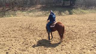 One Rein Stop Circle 4 Horsemanship