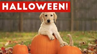 Funniest Cats & Dogs Wearing Halloween Costumes Blooper Compilation 2016 | Funny Pet Videos