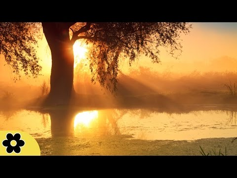 Relaxing Sleep Music, Calm Music, Soft Music,  Instrumental Music, Sleep Meditation, 8 Hours, ✿169C