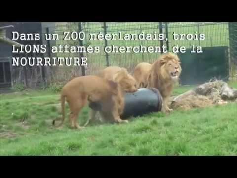 image drole lion