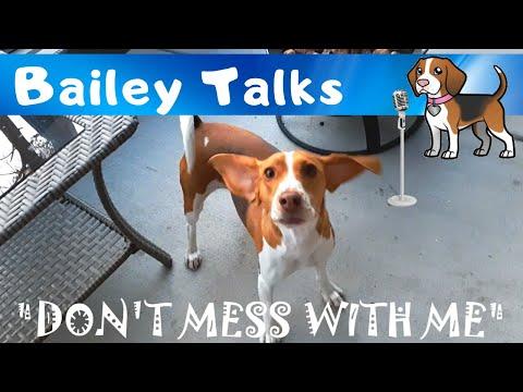 What Would Princess Bailey Like? - Bailey Talks