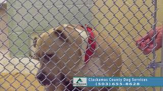 Adoptable Dogs in Clackamas County: Aug. 7 - 14