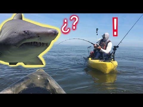 Catching SHARKS On Kayaks - Saltwater Kayak Fishing Adventures On The Delaware Bay [2019]