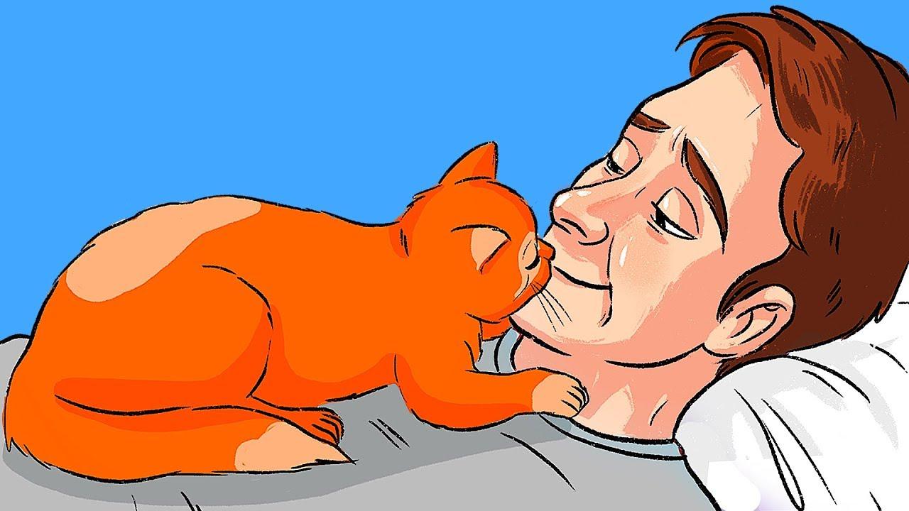 Более 10 признаков кошачьей любви
