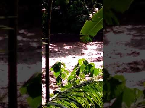 Kakakilabot na Baha sa Polomolok south cotabato by ( akuhnagid)