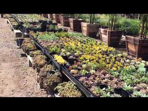 Martinez Succulent Nursery Tour 2019