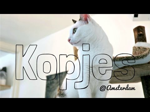 CAT CAFE IN AMSTERDAM: KOPJES | Wander with Waiyi