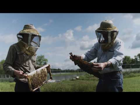 The Honey Bee Algorithm