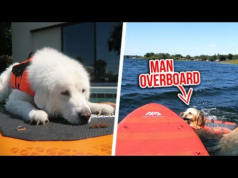 DOGS TRY PADDLE BOARDING FOR THE FIRST TIME
