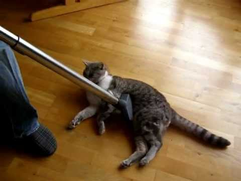 My cat Forrest gets vacuumed !!!