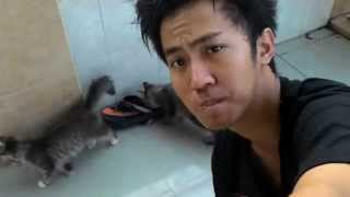 Download Video COWOK GANTENG SAMA KUCING MP3 3GP MP4