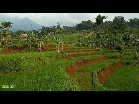 Musik Kecapi Suling Dan Hamparan Sawah Yang Indah Bikin Betah Ll Suasana Desa.