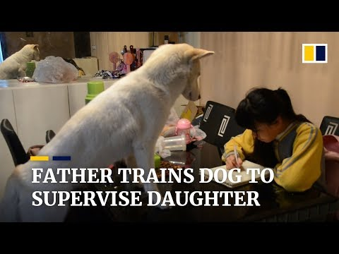 Father trains dog