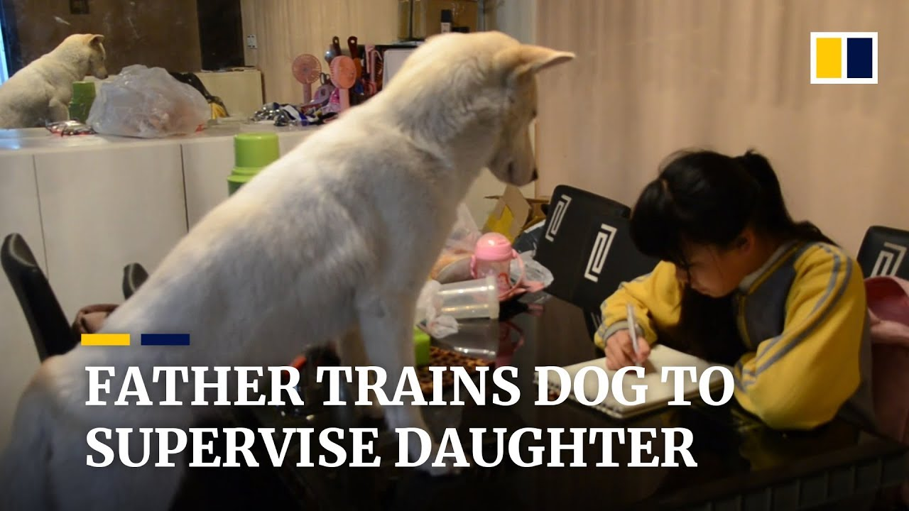 CHINA: ASIAN FATHER TRAINS DOG TO SUPERVISE HIS DAUGHTER