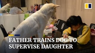 Father trains dog to supervise his daughter as she does homework in China