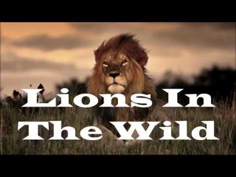 Martin Garrix  -  Lions In The Wild (Audio)