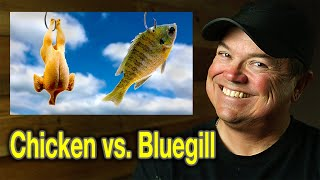 Bluegill vs. Chicken for Catfish Bait