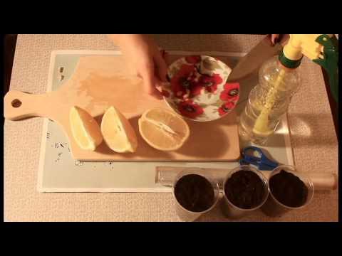 Как правильно пересадить лимон в домашних условиях видео