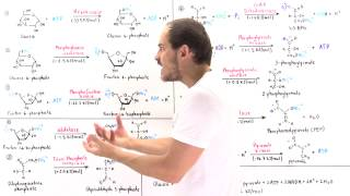 Overview of Glycolysis