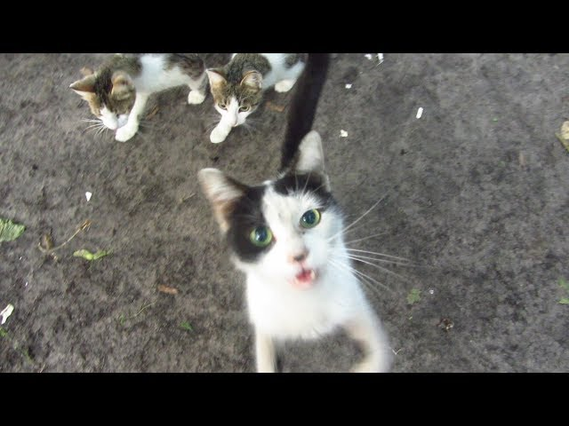 Cat is so hungry that meow very loudly
