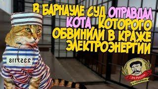 Из России с любовью. В Барнауле суд оправдал кота, которого обвинили в краже электроэнергии