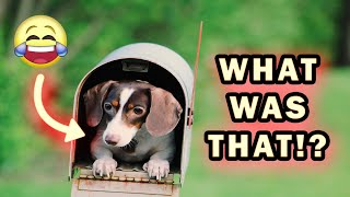 Funny Dog Videos 2020🤣 It's time to LAUGH with Dog's life - Dogs 🐶 Of The Month -Try Not To Laugh