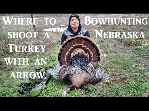 archery shot placement turkey where to shoot a turkey with mathewss bow and  arrow