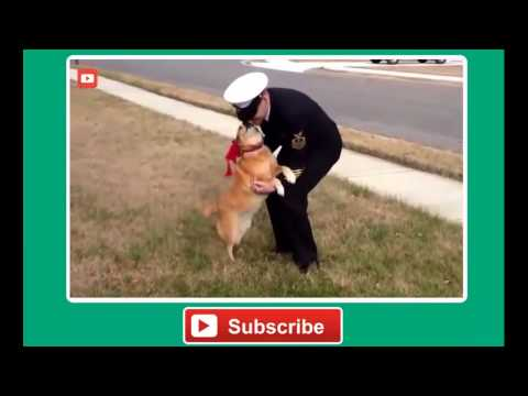Dogs Welcome Back Soldiers & Crazy Dogs Reactions – Funny Pets, Funniest Animals