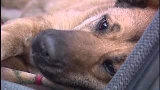 В Абакане девушка живёт в машине с больной собакой