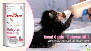 Заменитель кошачьего молока · Royal Canin Babycat Milk · Молоко для котят