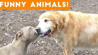 funny animal moments