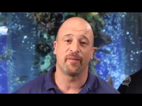 You Ve Got Brett Raymer And Wade King On Custom Aquariums