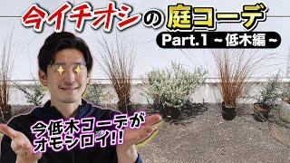 【庭コーデ例①】お庭を特別な雰囲気にしてくれる低木コーデ