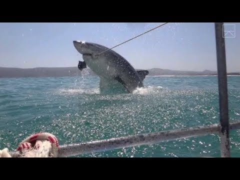 Top 10 Horrific Shark Attack Footage Caught On Tape